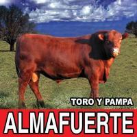 Toro y Pampa de Almafuerte