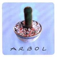 Canción 'Periferia' del disco 'Árbol' interpretada por Arbol