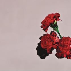 Disco 'Love in the Future' (2013) al que pertenece la canción 'Aim High'