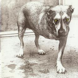 Alice in Chains - Shame In You