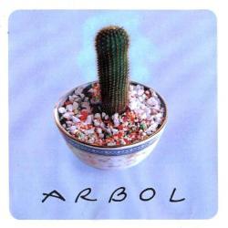 Chajal - Arbol | Árbol