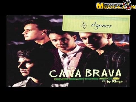 Caña Brava (Colombia)
