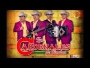 Cardenales de Sinaloa