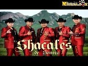 Shacales De Sonora