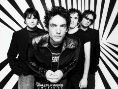 Wallflowers, the