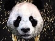 Doble Gracias - Panda