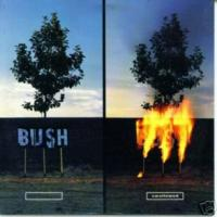 Swallowed - Bush
