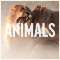 Animals de Maroon 5