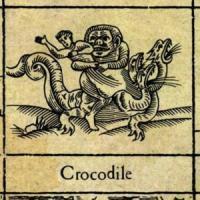 Crocodile de XTC
