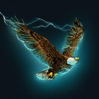 Águila en vuelo - Tren Lokote