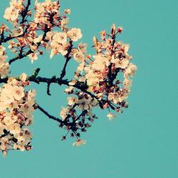 Imagen de la canción 'Magnolia'