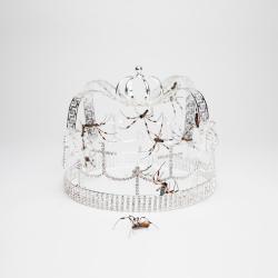 Imagen de la canción 'you should see me in a crown'