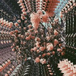 Imagen de la canción 'Dazed Days'