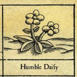 Imagen de la canción 'Humble Daisy'