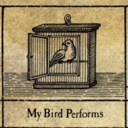 Imagen de la canción 'My Bird Performs'