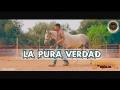 Perdidos de Sinaloa - La Pura Verdad