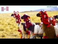Himnos de Países - Himno de Perú